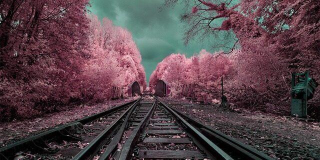Tracks[3]